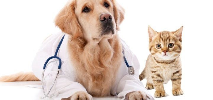 Verwalten Sie die Gesundheit Ihres Haustieres!
